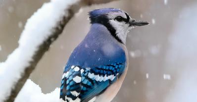 L'hiver à vol d'oiseau