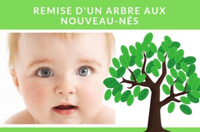 Remise d'un arbre aux nouveau-nés